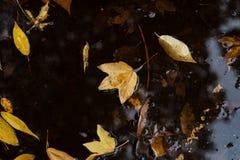 De bladeren van de herfst in vulklei van water Royalty-vrije Stock Foto