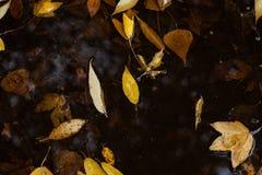 De bladeren van de herfst in vulklei van water Royalty-vrije Stock Afbeeldingen