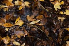 De bladeren van de herfst in vulklei van water Royalty-vrije Stock Fotografie