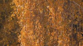 De bladeren van de herfst in de wind stock video