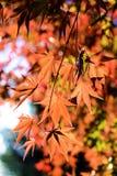 De bladeren van de herfst in zonlicht Royalty-vrije Stock Foto's