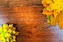 De bladeren van de de herfstesdoorn op donkere houten achtergrond Royalty-vrije Stock Afbeelding