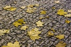 De bladeren van de de herfstesdoorn op van het bedekken De achtergrond van de herfst Rode en oranje het bladclose-up van de kleur Royalty-vrije Stock Afbeelding