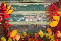 De bladeren van de de herfstesdoorn over oude groene houten achtergrond met exemplaarruimte en de tekstherfst Stock Foto