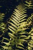 De bladeren van de de herfstvaren in bos stock foto