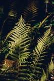 De bladeren van de de herfstvaren in bos royalty-vrije stock foto