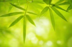 De bladeren van het bamboe Royalty-vrije Stock Afbeeldingen