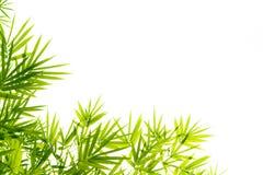 De Bladeren van het bamboe Stock Afbeelding