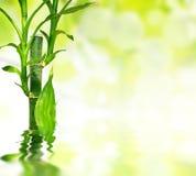 De bladeren van het bamboe die in water worden weerspiegeld Royalty-vrije Stock Foto