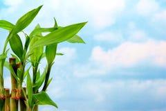 De Bladeren van het bamboe over Blauwe Hemel Stock Foto's