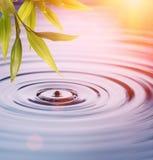 De bladeren van het bamboe over water Stock Afbeelding