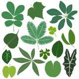 De bladeren van het blad planten tropisch Stock Afbeelding