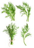 De bladeren van het dillekruid op wit worden geïsoleerd dat specerij Voedselingrediënt royalty-vrije stock afbeeldingen