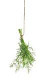 De bladeren van het dillekruid op wit worden geïsoleerd dat Voedselingrediënt specerij royalty-vrije stock foto's