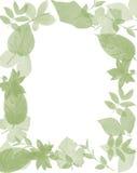 De bladeren van het frame Royalty-vrije Stock Afbeelding