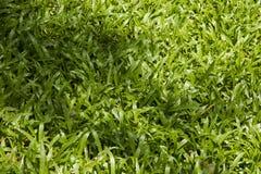 De bladeren van het gras. Stock Afbeeldingen