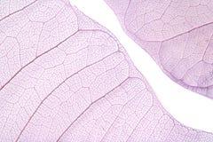 De bladeren van het skelet Royalty-vrije Stock Foto