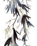 De bladeren van het waterverfbamboe Stock Afbeelding