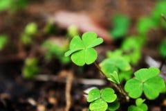 De bladeren van jonge bomen ter plaatse royalty-vrije stock afbeelding