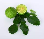 De Bladeren van de Kaffirkalk & Kaffir-Kalkfruit| Bai makrut & ziet makrut eruit royalty-vrije stock afbeelding