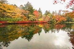 De bladeren van de kleurenverandering stock afbeeldingen