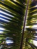 De bladeren van de kokospalmen die schaduw aan de hieronder grond verstrekken royalty-vrije stock afbeeldingen
