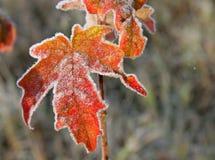 De bladeren van november Stock Afbeeldingen