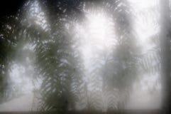 De bladeren van de onduidelijk beeldvaren in mist Stock Foto's