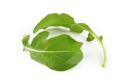 De bladeren van Rucola Stock Afbeelding