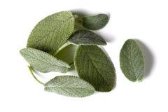 De bladeren van Salvia royalty-vrije stock fotografie