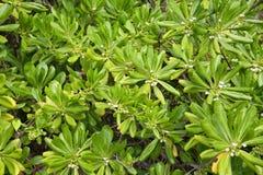 De bladeren van tropische installaties met kleine bloemen Stock Foto