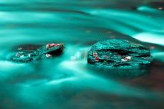 De bladeren van waterstenen royalty-vrije stock foto