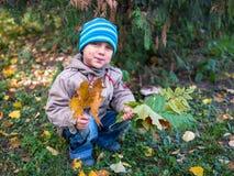 De bladeren van weinig jongensholding in de herfstpark royalty-vrije stock fotografie