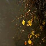 De Bladeren van Yelow op een Nevelige Dag van de Herfst Stock Foto
