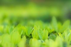 De bladeren vertroebelen Vers groen gras ondiep DoF Natuurlijk groene installatieslandschap gebruikend als achtergrond of behang stock fotografie