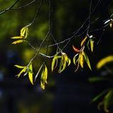 De bladeren wijzen op de zonneschijn , Stock Afbeelding