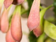 De bladeren zijn gevormd en de kleur is gelijkaardig aan de tong stock afbeeldingen
