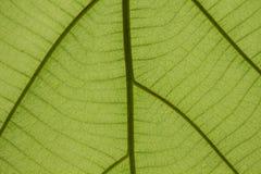 De bladeren zijn tegengesteld aan het licht royalty-vrije stock afbeelding