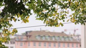 De bladerenachtergrond van de boom stock video