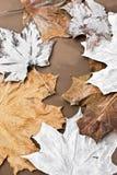 De bladerenachtergrond van de esdoorn stock foto's