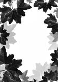 De bladerenachtergrond van de esdoorn Stock Fotografie