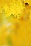 De bladerenachtergrond van de herfst Royalty-vrije Stock Afbeelding