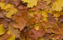 De bladerenachtergrond van de herfst stock afbeeldingen