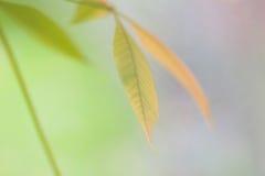 De bladerenachtergrond van de herfst Stock Foto