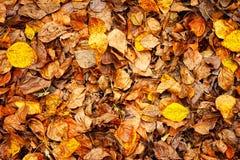 De bladerenachtergrond van de herfst Royalty-vrije Stock Foto's