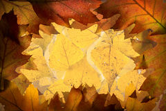 De bladerenachtergrond van de herfst stock fotografie