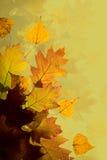 De bladerenachtergrond van de herfst stock afbeelding
