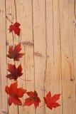 De bladerenachtergrond van de herfst Royalty-vrije Stock Afbeeldingen