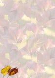 De bladerenachtergrond van de herfst stock foto's