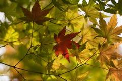 De achtergrond van de herfstbladeren stock foto's